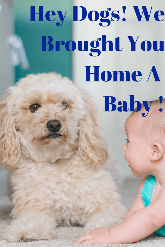 Hey Dogs! We Brought You Home A Baby!